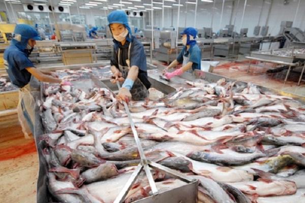 Hoạt động sơ chế cá tra của công nhân Công ty cổ phần Hùng Vương thông báo lỗ lớn