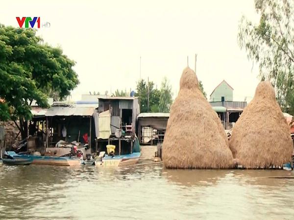 mực nước sông Cửu Long dâng cao