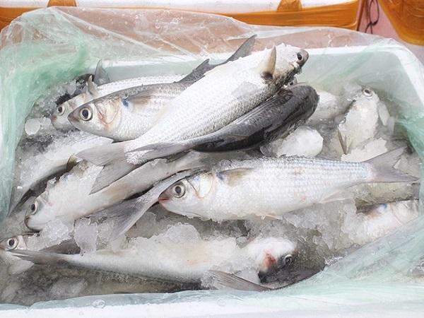 thực phẩm đông lạnh nhập lậu không rõ nguồn gốc