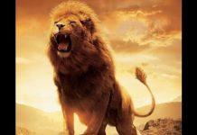 Mơ sư tử đánh con nào