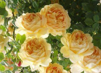 Giải mã mơ thấy hoa có ý nghĩa gì?
